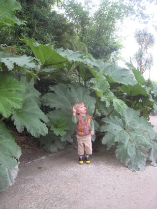 Jake under the Gunnera