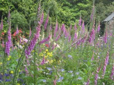 Beautiful wild flower patch