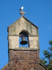 Seagull on the bell tower