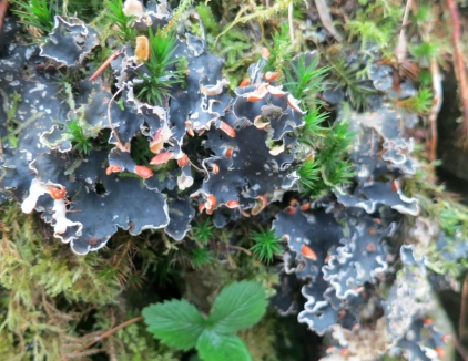 Very beautiful lichen