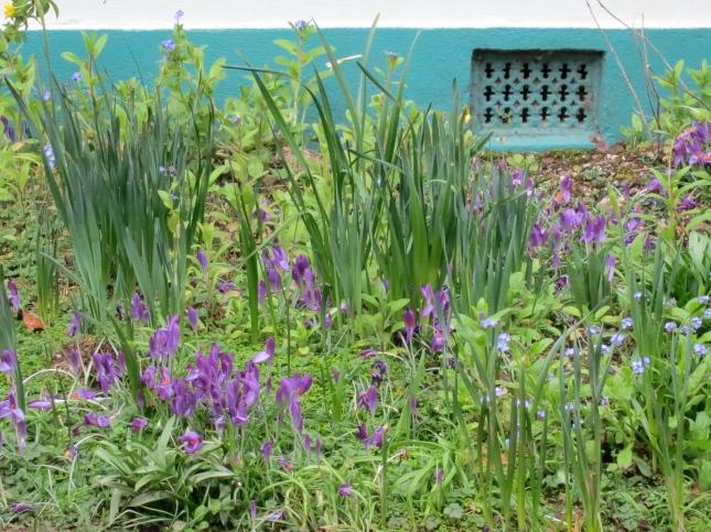 A neighbour's garden