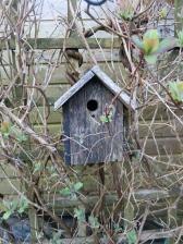 Bird house in the honeysuckle