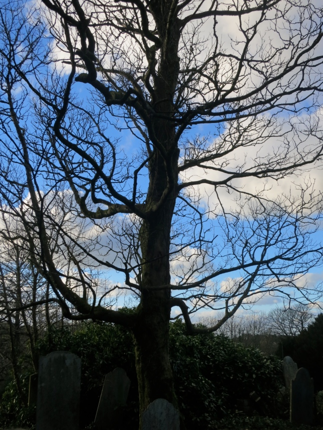 I love the bare branches against the sky.