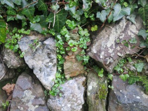 Little mice live in this wall. We see them only occasionally