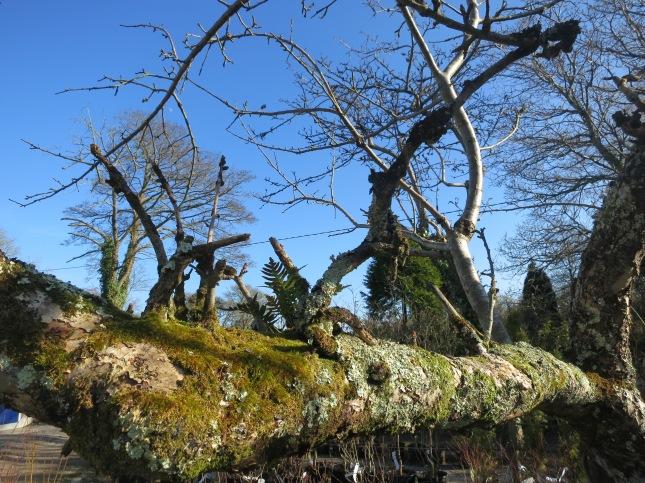 Moss, lichen and ferns