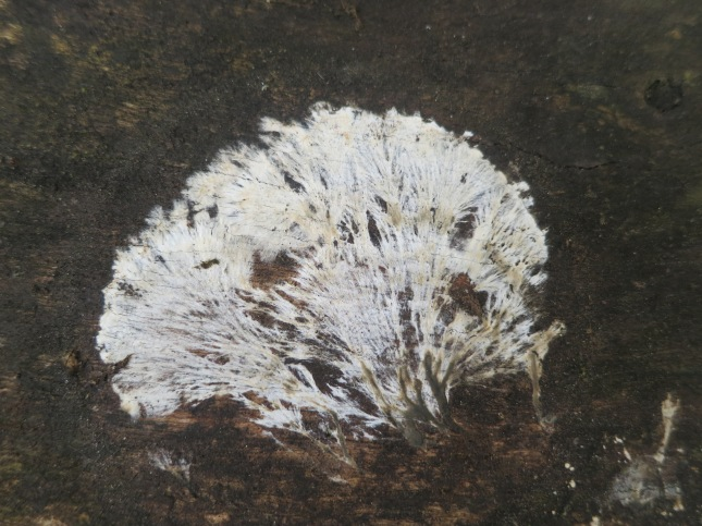 Beautiful fungus