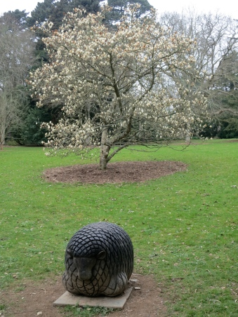 Spiral sheep and Magnolia tree in Trelissick