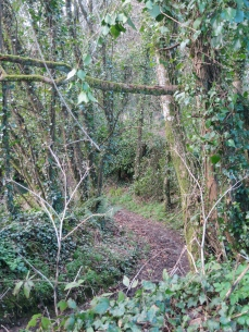 Walking up to The Flat Lode Trail