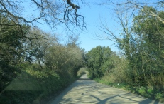 A sunlit lane from Penryn to Mylor