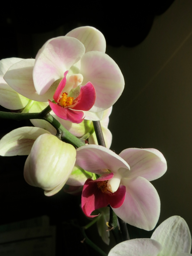 Orchid in the early morning sunshine