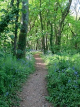Another woodland path