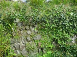 Cornish hedge in our garden