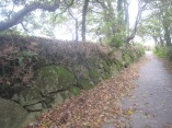 Huge boulders in this hedge