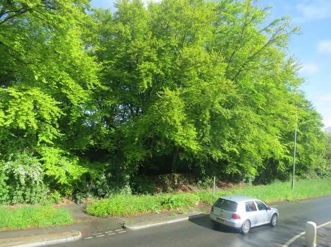 I love the green of Spring leaves, from the bus