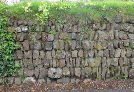 Cornish hedge 1