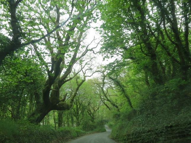 Lane through Kennal Vale