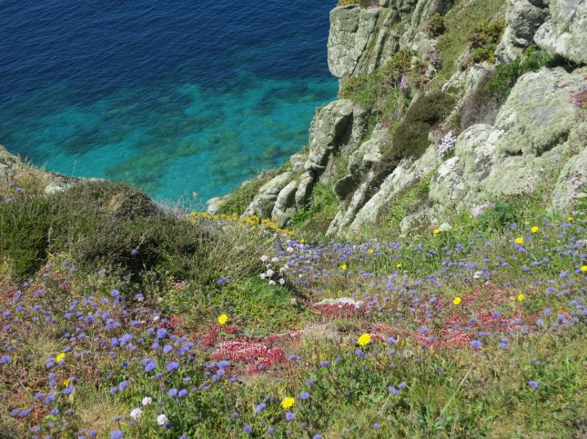 Wild flowers and sea
