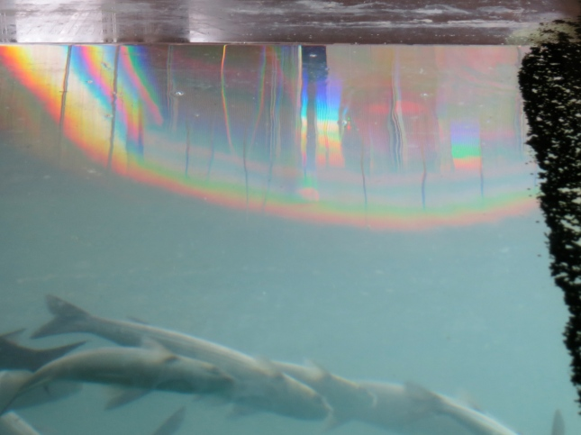Rainbow at the top of the tidal pool