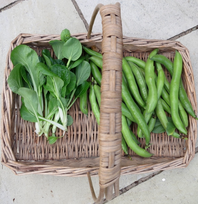 Trug with Broad Beans and Pak Choi