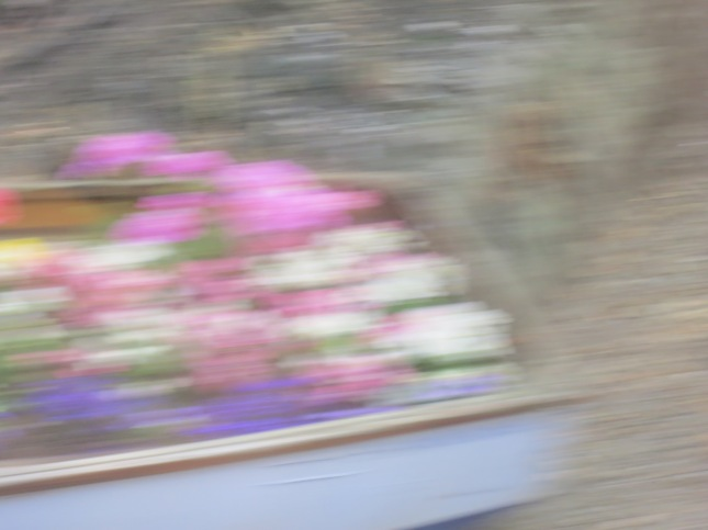 Boat of flowers from moving train