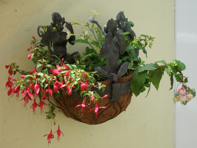 Three wise monkeys planted up with fuchsias