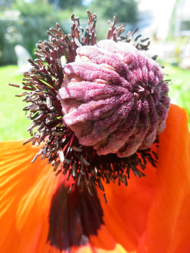 Velvet seed head