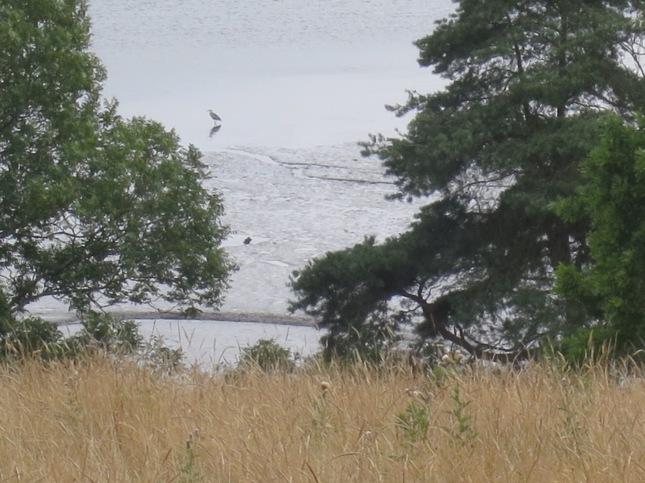 Heron, landscape