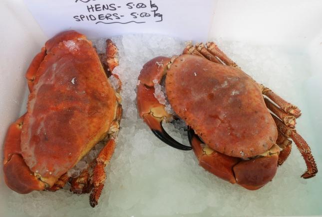 Cornish crabs