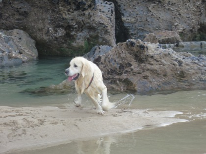 Dog playing in the pools; I love the movement in this one
