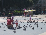 Feeding the pigeons in the park