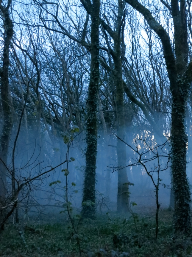 A layer of mist in Tehidy woods
