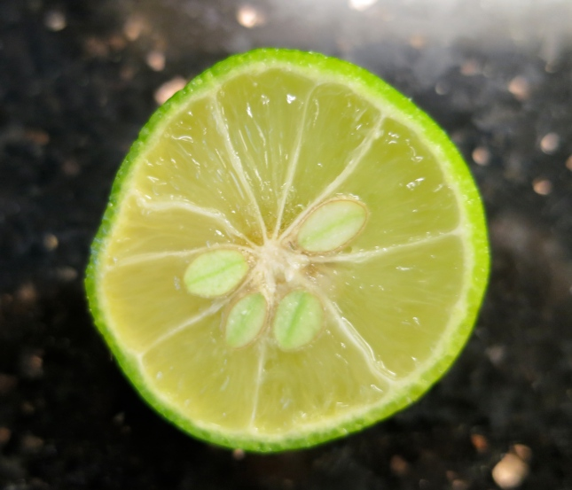 Inside a Limequat