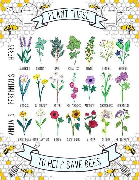 Plant these to save bees