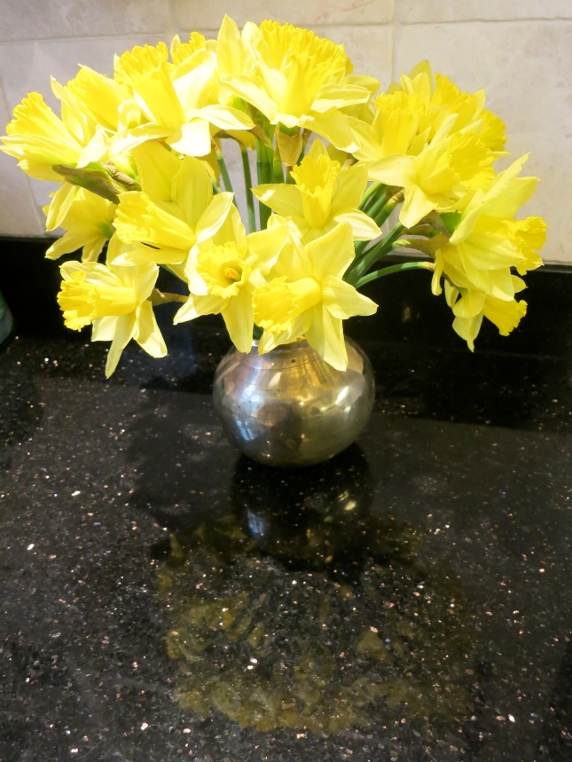 Beautiful Cornish daffodils