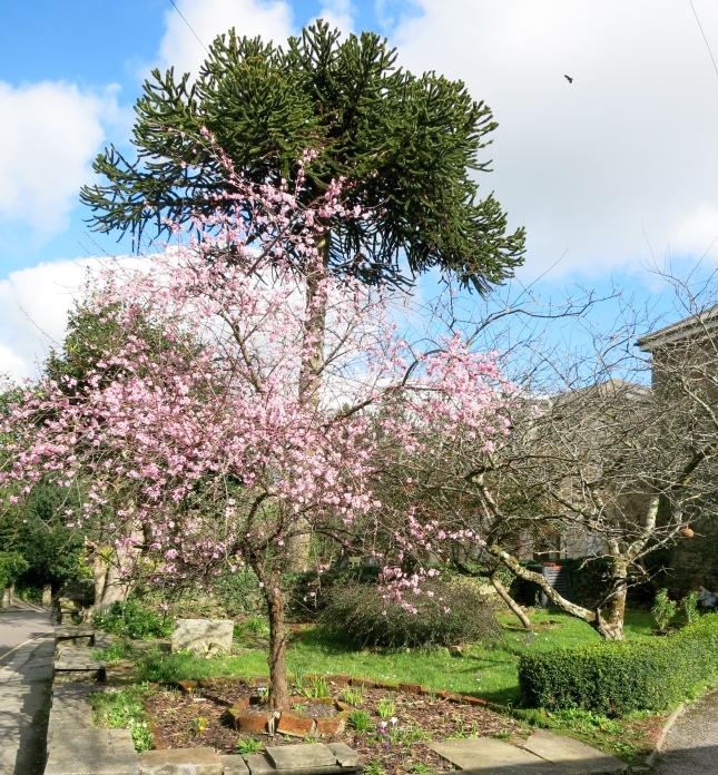 Blossom and crocuses
