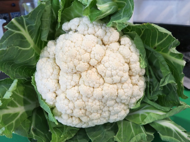 Enormous Cornish cauliflower