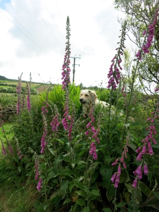 Kaia among the Foxgloves