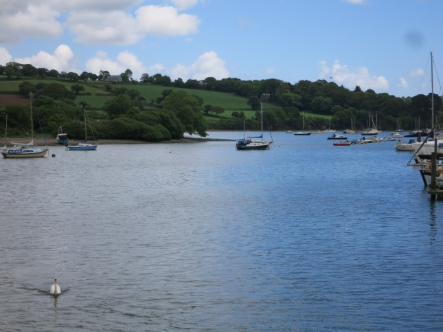 Penryn River and swan