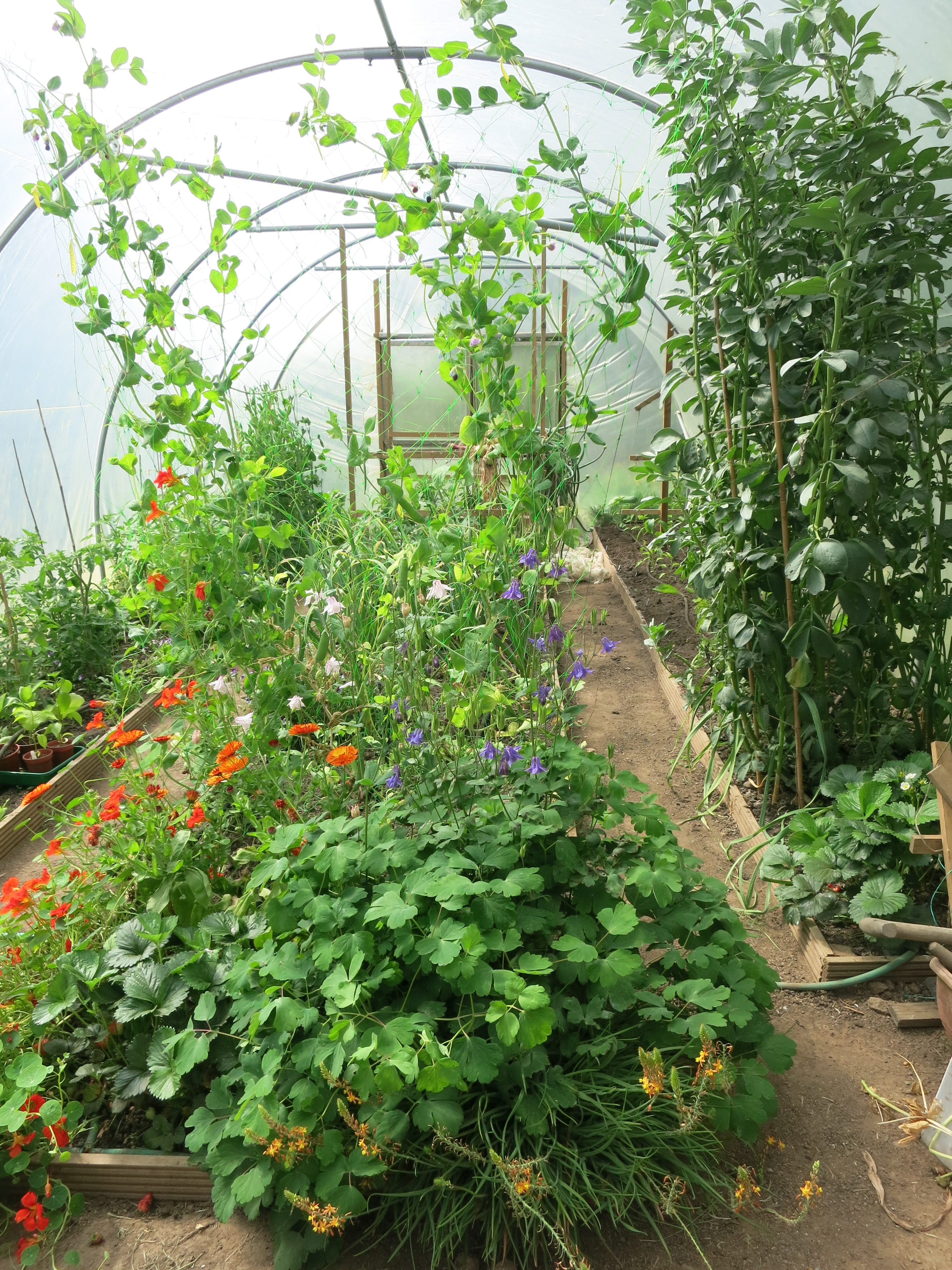 how to make a mini polytunnel