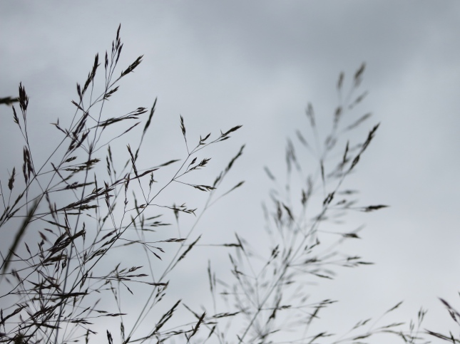 Grasses and a grey sky