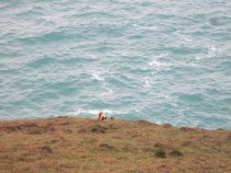 Dog on the cliff edge