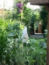 The Fledgling through the vegetation