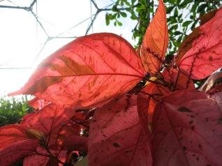 Sunlight through the leaves