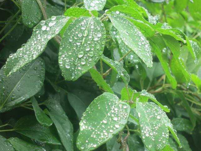 Rain drops in the sun