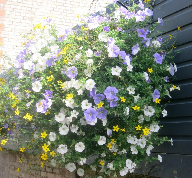 One of Truro's glorious hanging baskets