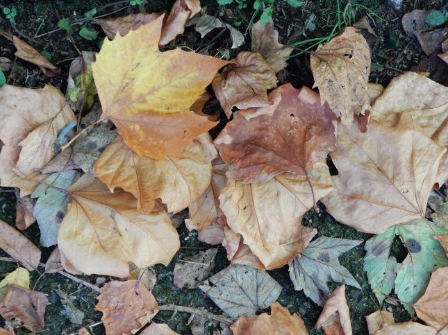 Leaves underfoot