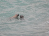 A pair of seals