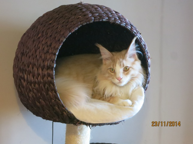Gizmo filling the basket