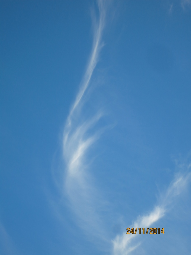 Cat's tail clouds