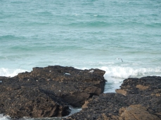 Birds and Mussels on the rocks